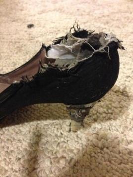 chewed shoe