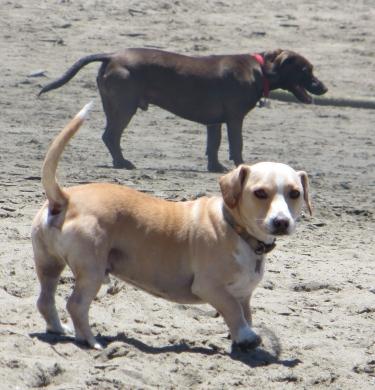 dogsonbeach