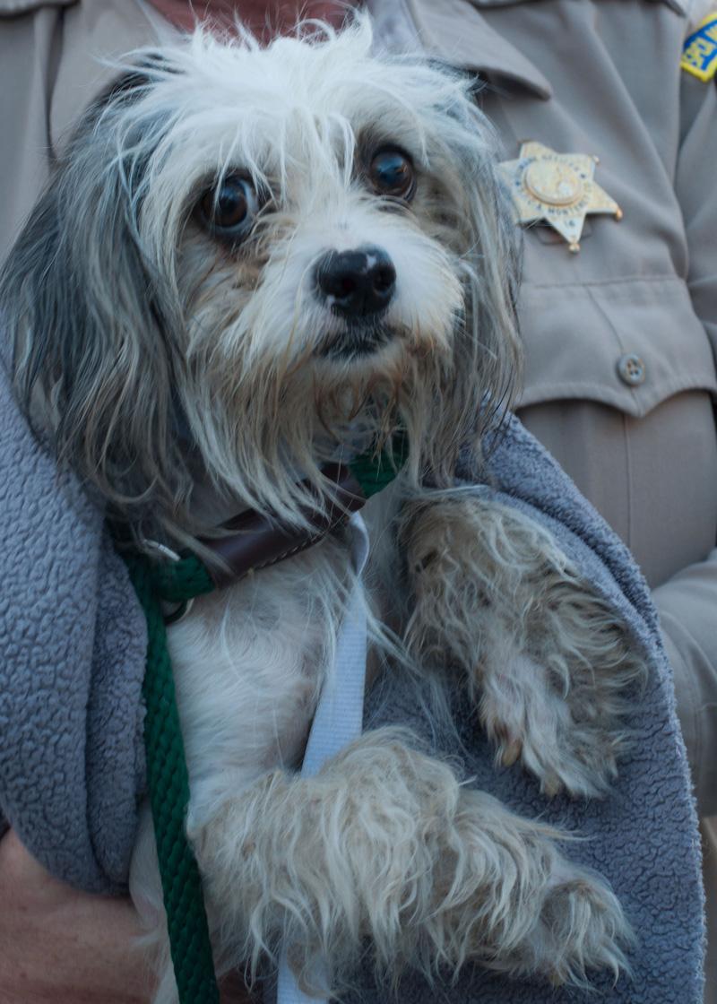 Dog Adoption Rescues Richmond Hill Ontario
