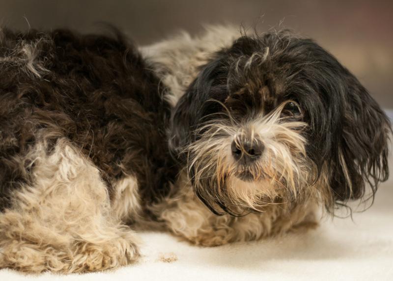 Dog Hoarding Rescue Behavior Problems Fear Aggression