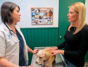 Dog Arthritis Raise Paw