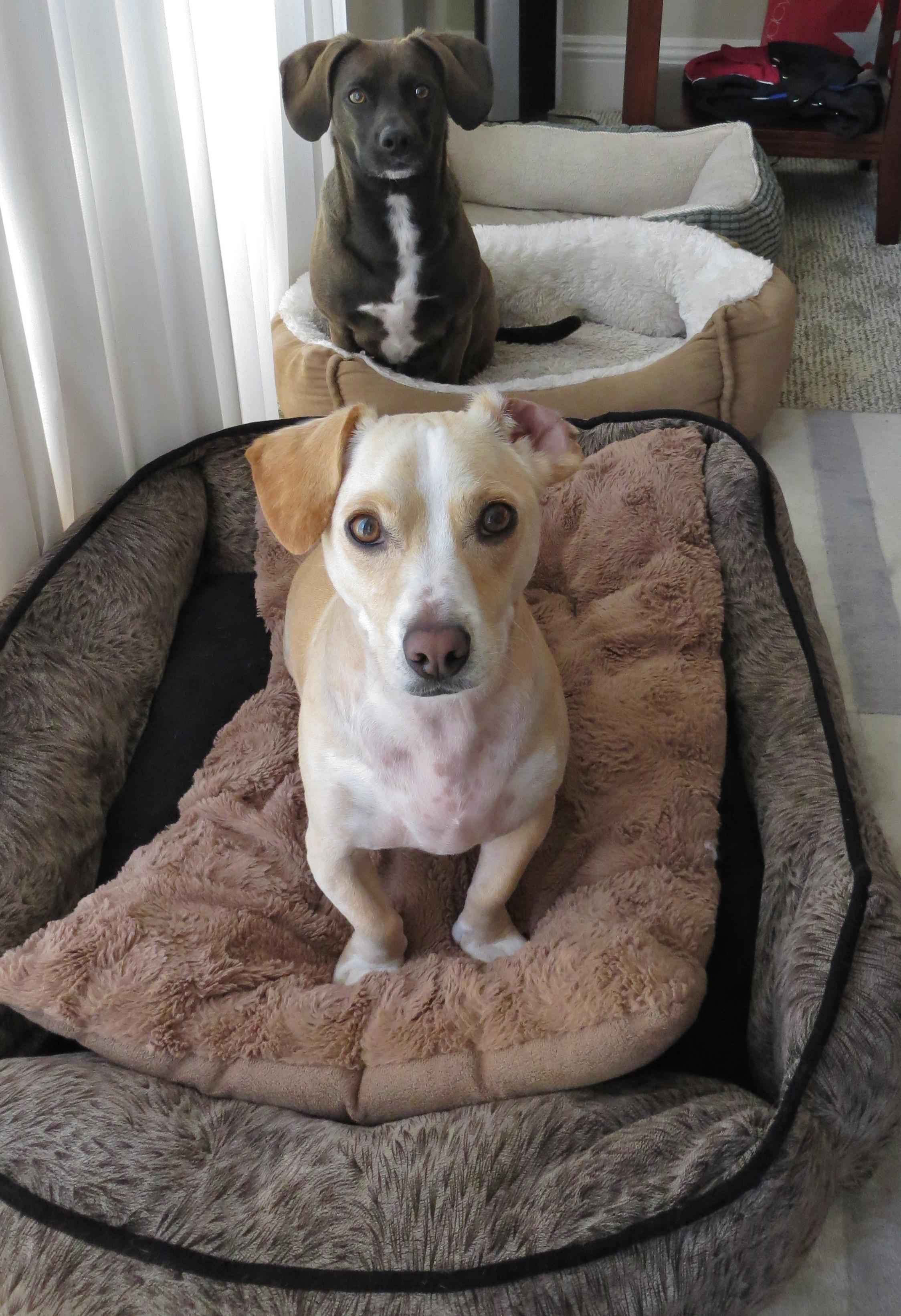 Best Washable Dog Beds Uk