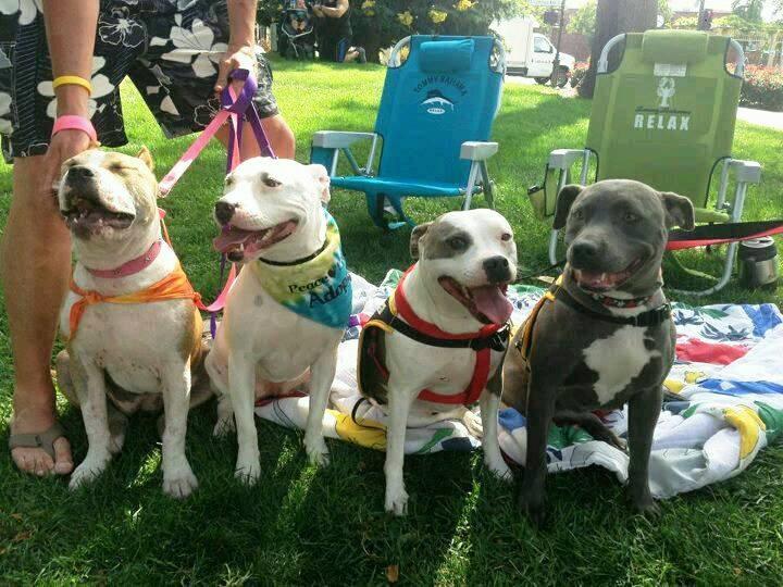 Dog Adoption Costa Rica