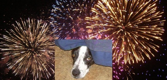 fireworks dog