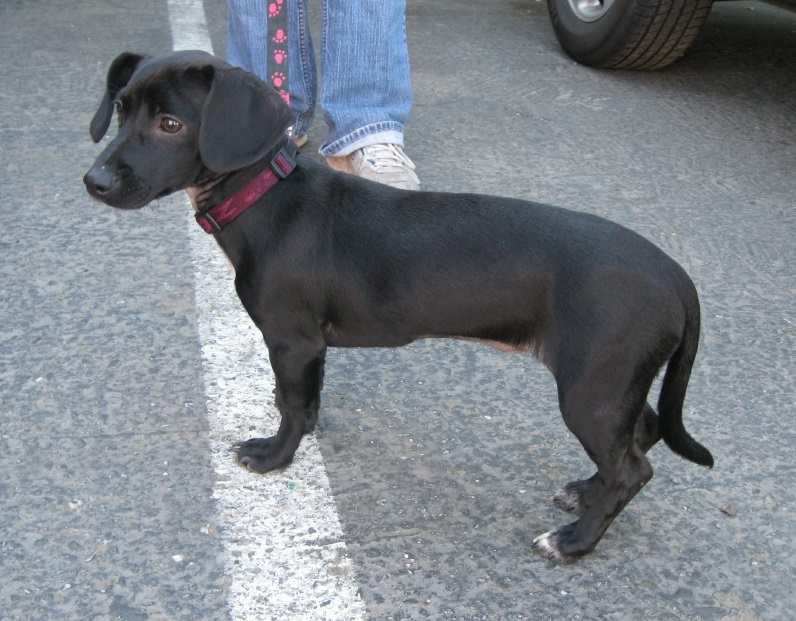Pick Breed Dog To Get