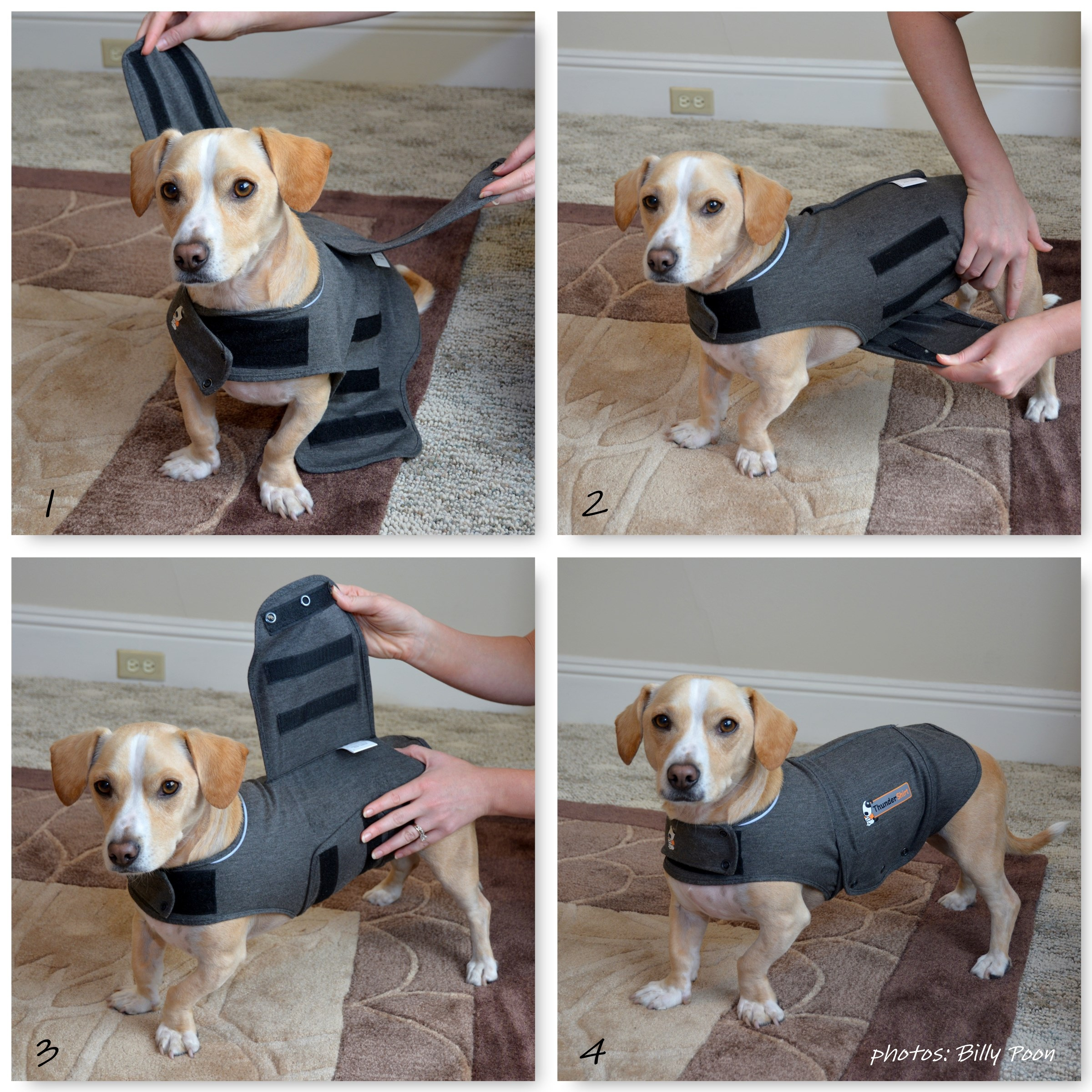 Do thundershirts for dogs really work