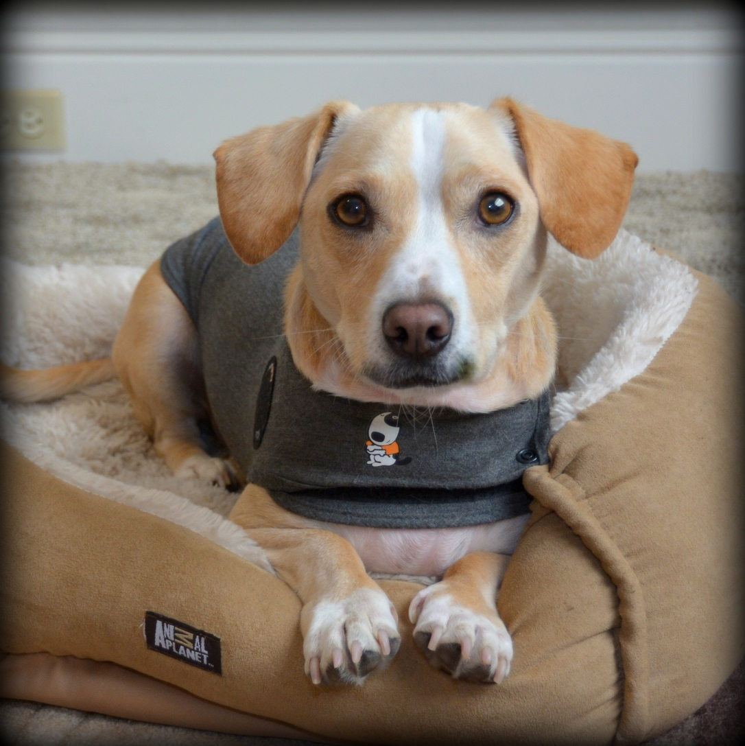 Thundershirt For Dogs Reviews