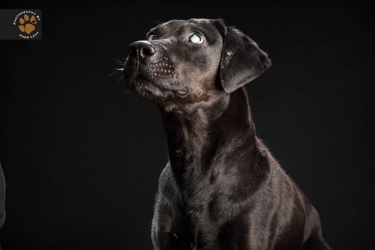 Black Dog Syndrome Photos