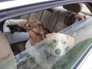 dogs in car with window cracked