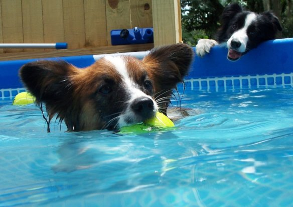 If your pooch loves the pool, keep him safe from toxic chemicals and know how to react if he gets his paws on something he shouldn't. Image via Flickr.
