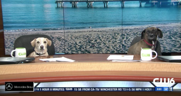 anchor dogs