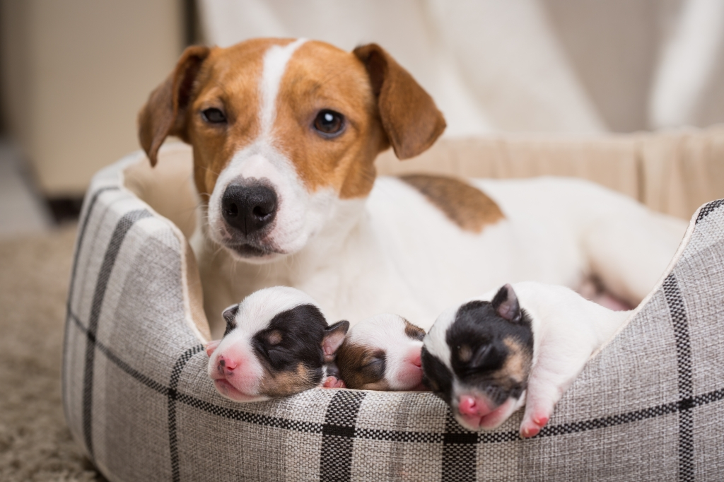 How To Pick The Best Dog Name For Your New Pup Yellow Dog Blog